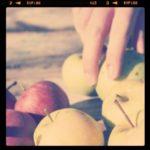 Apple Picking at Crooked Run Orchard